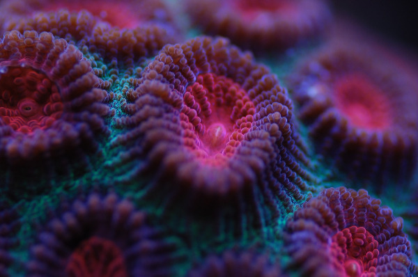 Corals with us in the sea water shop